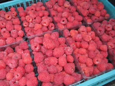 Punnets of Fresh Raspberries
